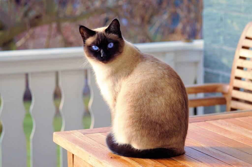 猫背を簡単一瞬で治す方法